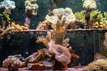 jelly fish in acquarium