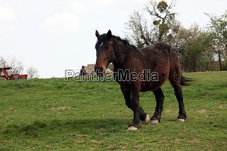 horse grazing on farmland