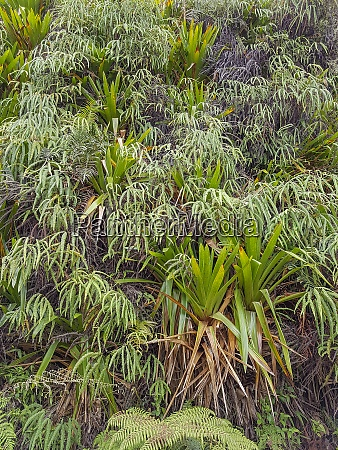 dense exotic vegetation
