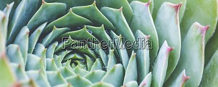 succulent plant background nature natural background