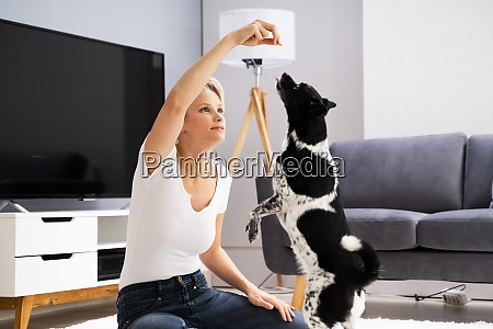 woman training and playing with pet