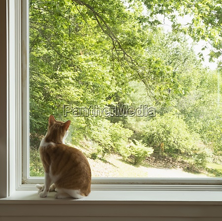 house cat looking out window