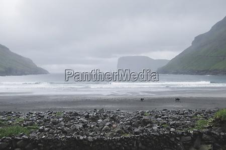 denmark beach in foggy day