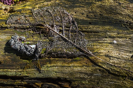leaf skeleton on a tree trunk