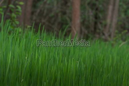 lush green grass in the forest