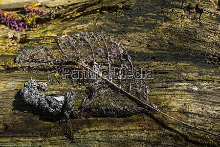 dried leaf on a tree trunk