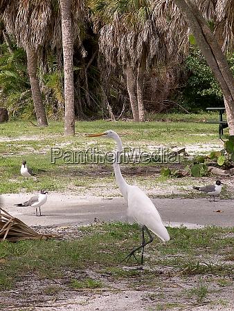 heron on the beach near st