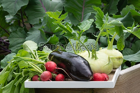 harvest season vegetable