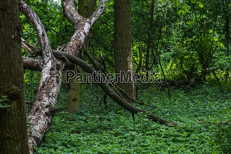 trees and plants in a forest