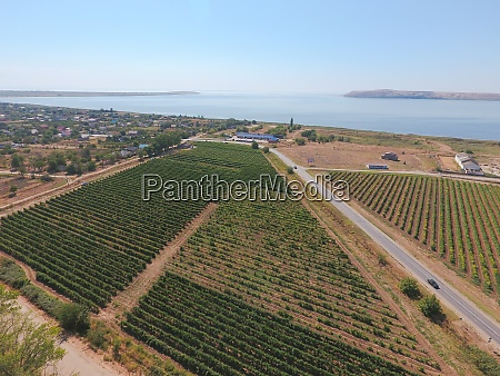 grape orchards birds eye view vine