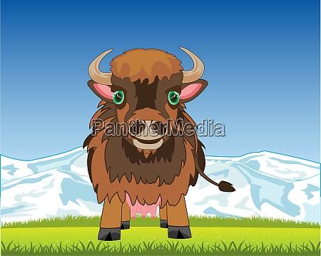 wildlife yak on background to glade