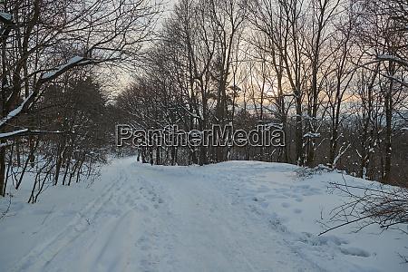 winter forest path walk