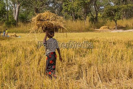 farmers working the field