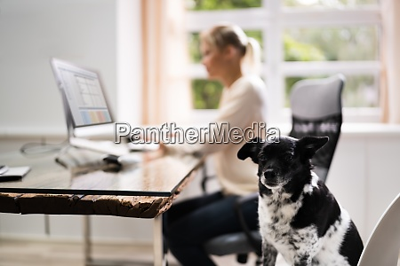 confident business woman with dog
