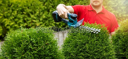 landscaping service gardener pruning and
