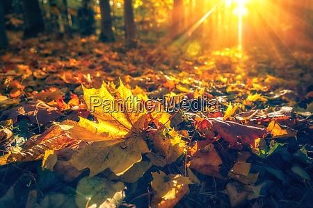 bright foliage in autumn park