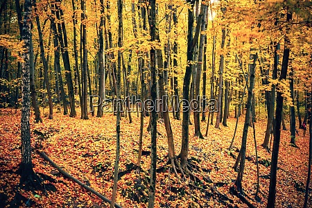 vibrant foliage in autumn forest