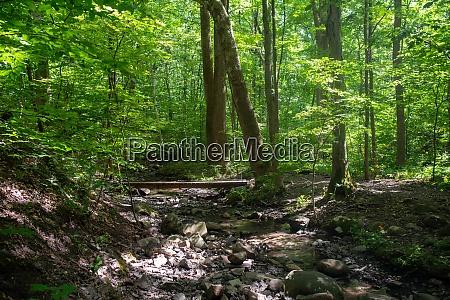 wooden footbridge across an idyllic forest