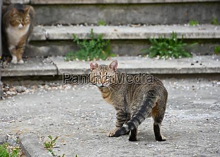 domestic street cat looking at camera