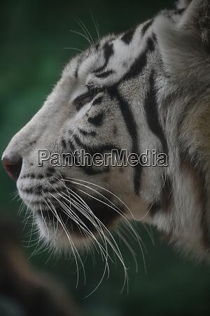 close up profile portrait of white