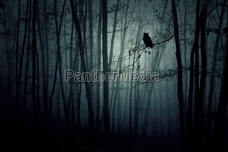 magic night in the woods halloween