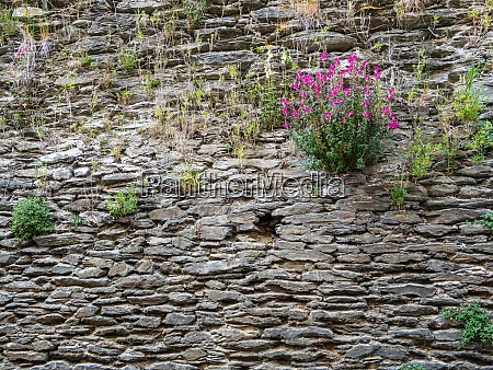 stone wall with grasses and a