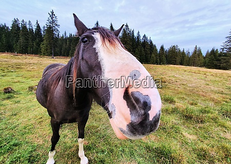 cute horse in the meadow
