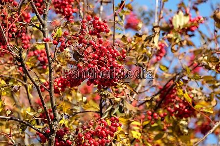 autumn impressions from the slovak tatras