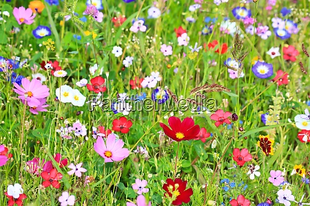 colorful flower meadow in the primary