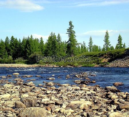 river in taiga in northern russia