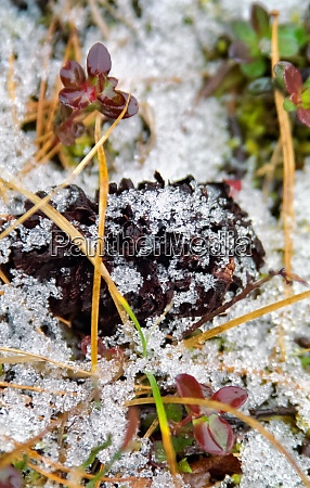 frost and snow on autumn frost