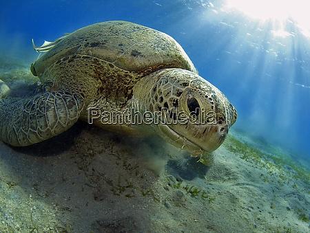 turtles breakfast