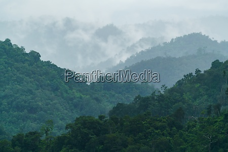 tropical forest with fog and mist