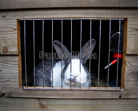 cute home rabbit in outside cage
