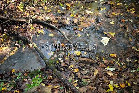 stream flows through an enchanted autumn