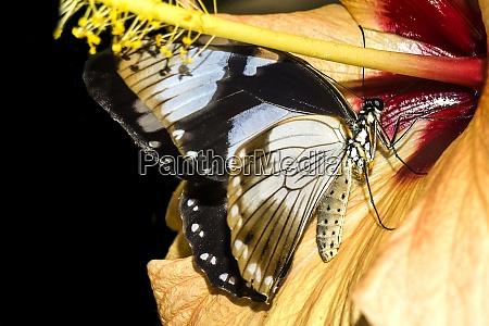 germany rhineland palatinate butterflies in