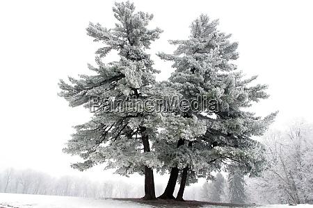 snowy tree alone in the snowy