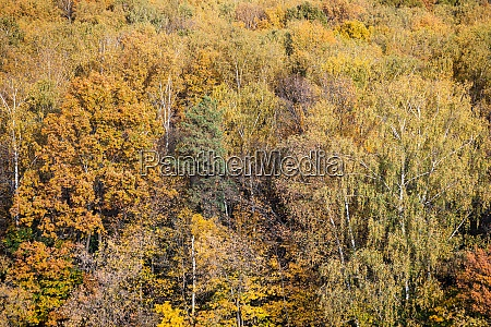 lush colorful foliage of mixed forest