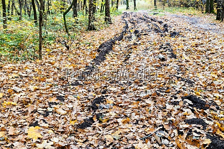 country road with ruts covered with