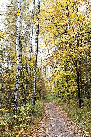 footpath between trees in city park