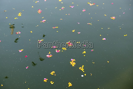 colourful floral offerings petals flowers and