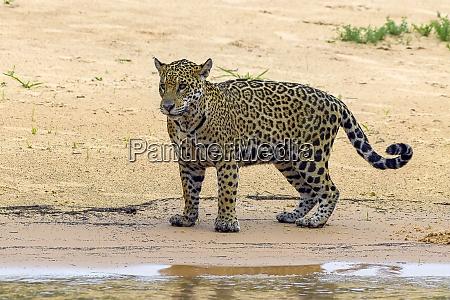 brazil pantanal 2019 22990