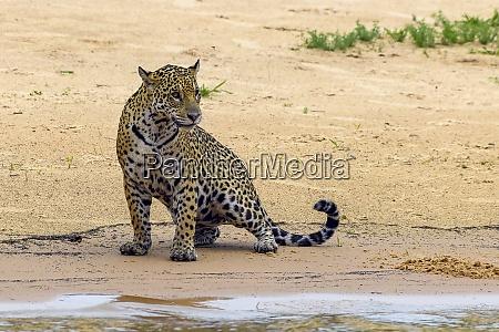 brazil pantanal 2019 22991
