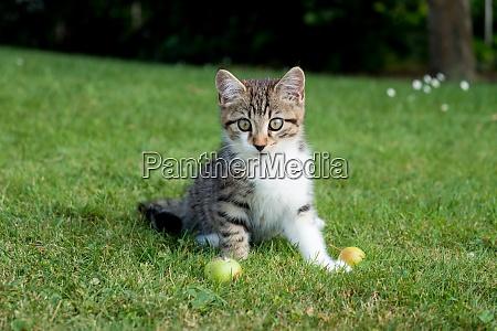 junges kaetzchen sitzt im gras