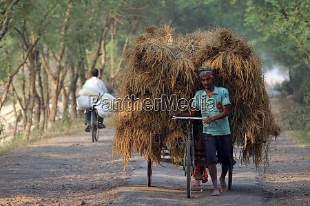 rickshaw rider transports rice from the