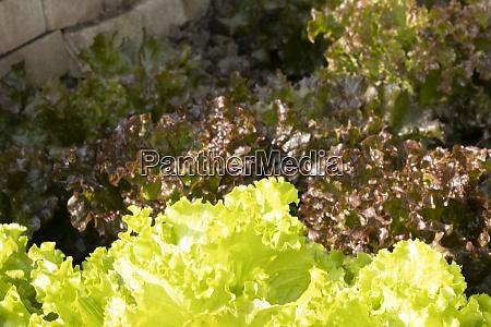 salad from feeding gentilina dark vegetable