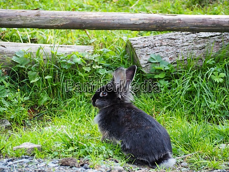 black bunny in a meadow
