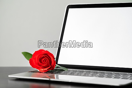 red rose and the laptop on