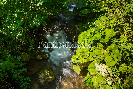 many green plants in a brook