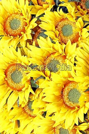 sunflowers detail